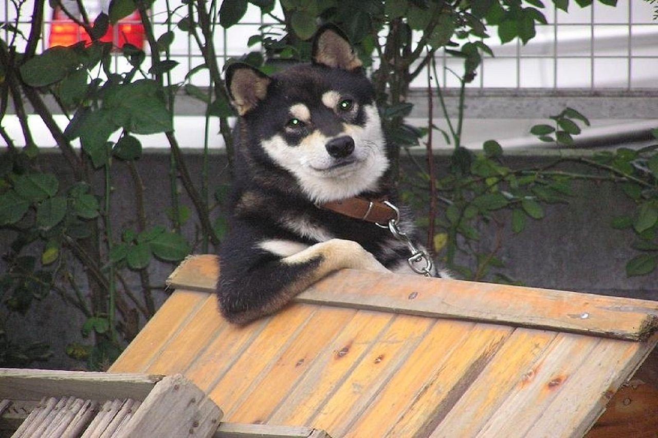 「一人暮らしだけど犬を飼いたい!」という願望があっても、「自分に世話ができるかどうか」や「留守中が心配」などと色々考えてしまい、躊躇してしまう人がいるかと思います。そこで今日は、一人暮らしで犬…