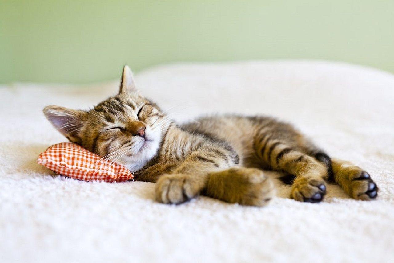 ワンルームで猫と生活したい!物件の選び方
