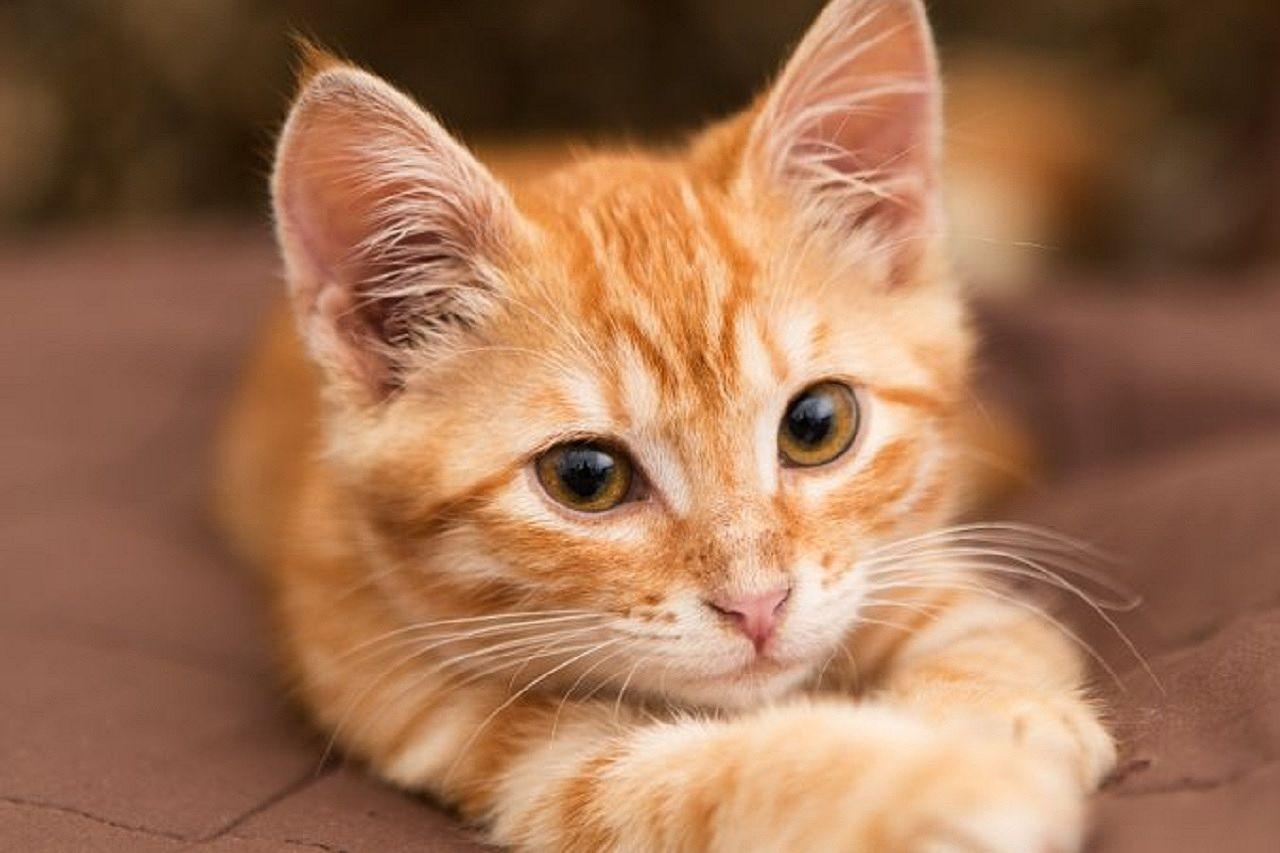 ペットと暮らせる賃貸物件は、全募集物件の中で1割未満しかありません。しかも、ペット可でも猫不可という物件もあるので、猫と暮らせる賃貸物件はかなり限られてきます。私としてはこのような現状から、ペ…