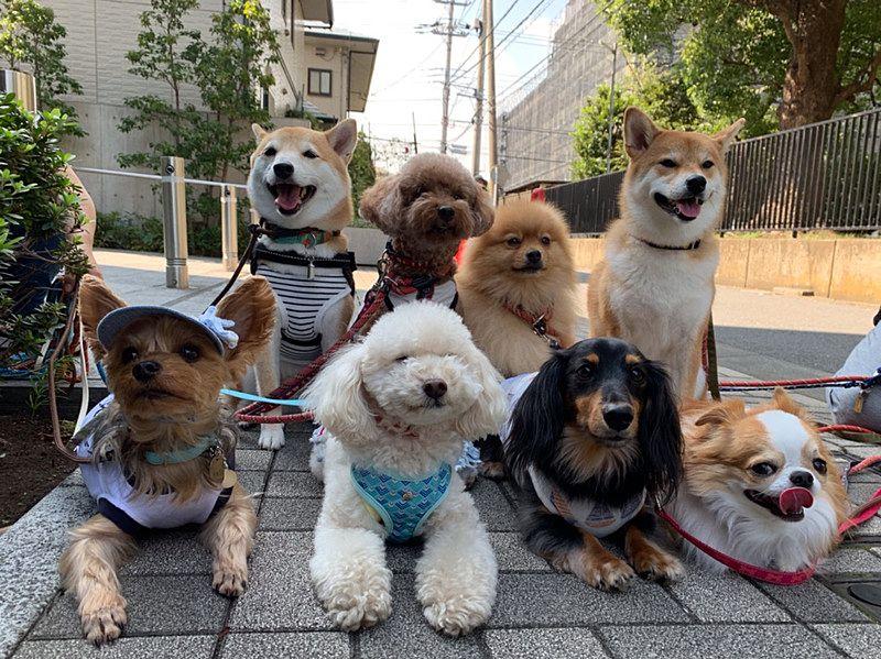 Ola familyのワンちゃんの散歩 みんな整列してハイポーズ
