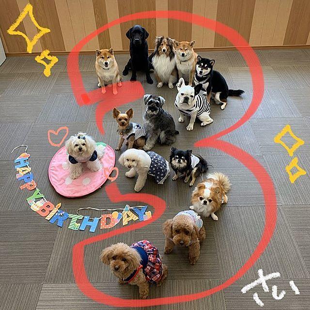 Ola familyのワンちゃんの誕生会 みんなちゃんと整列できてます!