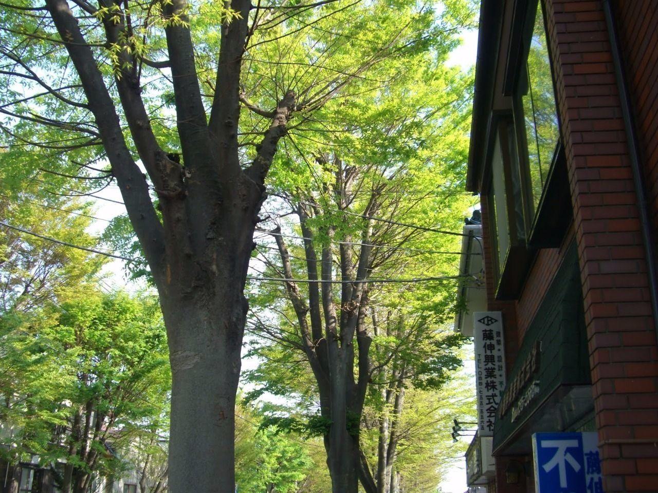 事務所前のけやき並木です。季節によって桜や紅葉などが見られます。緑に包まれ、心の通った生活のまち「ガーデン区」の名の通り緑の多い街です。